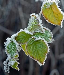 blade-vinter